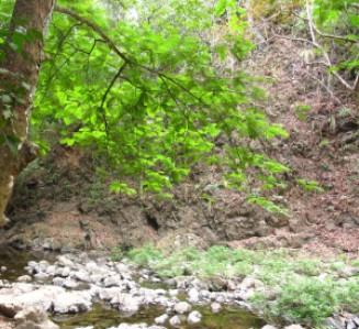 Forêt au Costa Rica